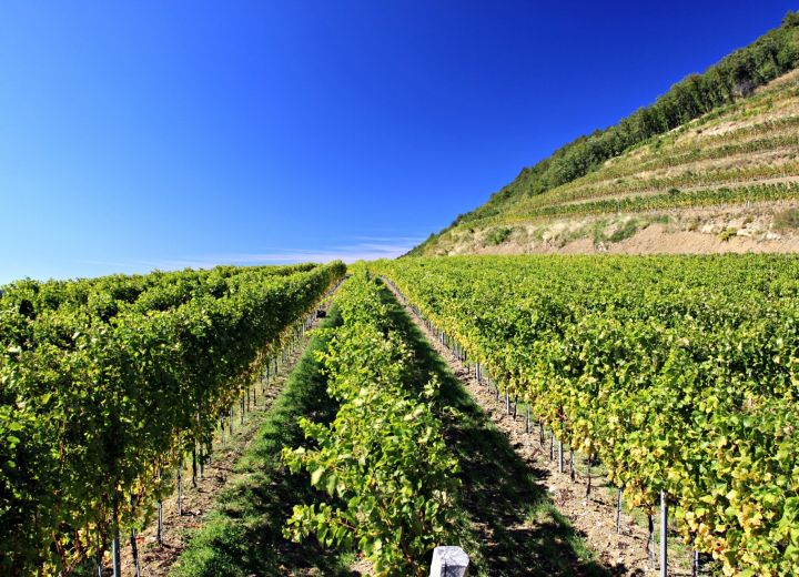 Guerila wines